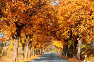 Herbst Allee