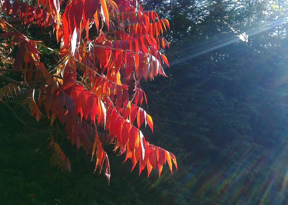 Linsenschmutz und Herbstfarben