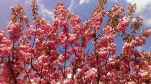 blütenrausch by abendfarben