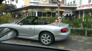 hund cabrio autofahren