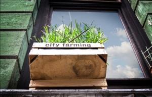 City Farming by dirk rexer hamburg fotografen grill
