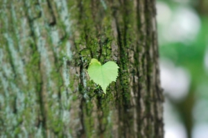 treeheart by mark ohh hamburg fotografengrill