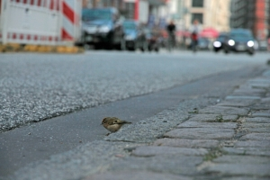 vogel tier rettung hamburg grosse elbstrasse by abendfarben tom koehler