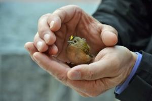 vogel tier rettung hamburg grosse elbstrasse by abendfarben tom-koehler